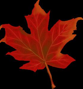 leaf-984998_1280