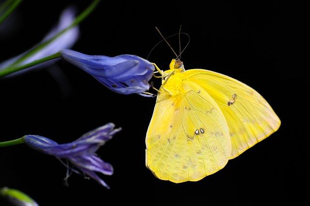 butterfly-1413678_640